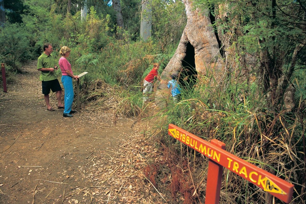 Bibbulmun Track in Walpole-Nornalup National Park.