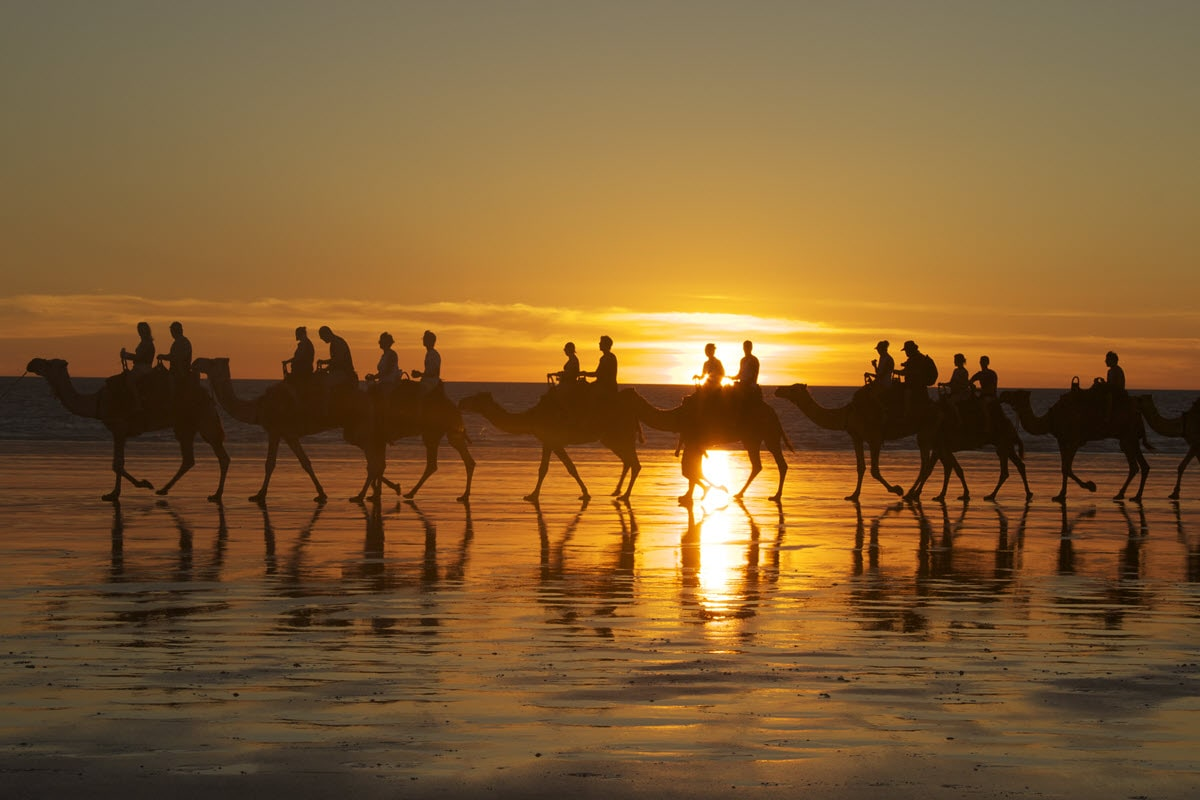 Travellers riding camels in a line as the sun sets over Cable Beach in Broome, Western Australia.
