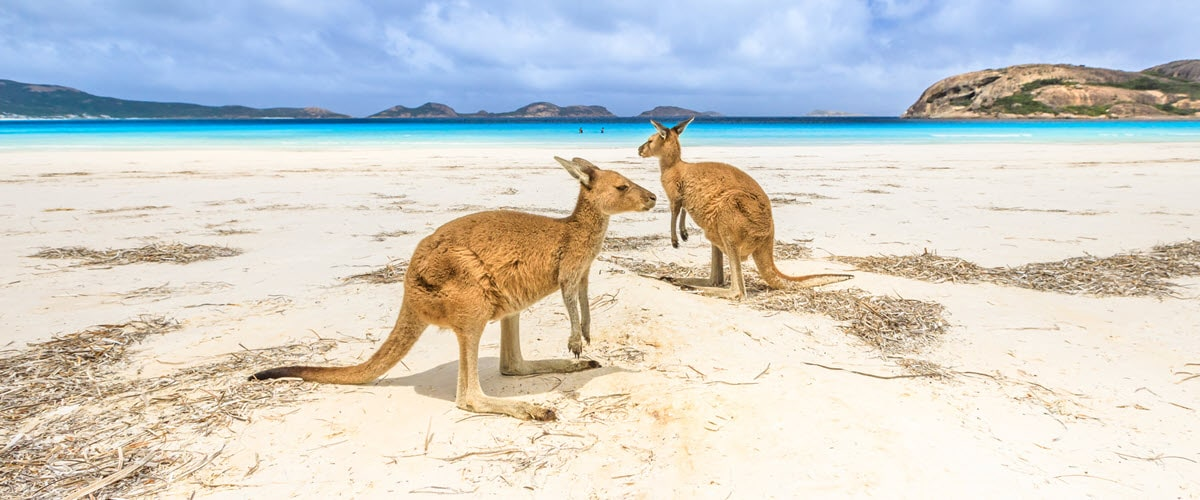 cape le grand wildlofe spotting esperance kangaroos lucky bay