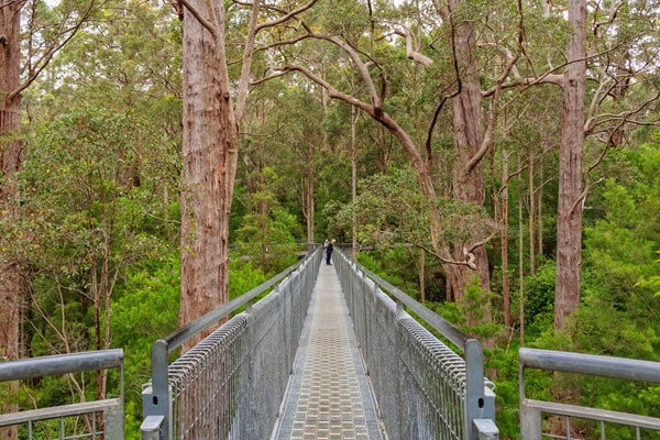 travel around christmas to walpole-nornalup national park
