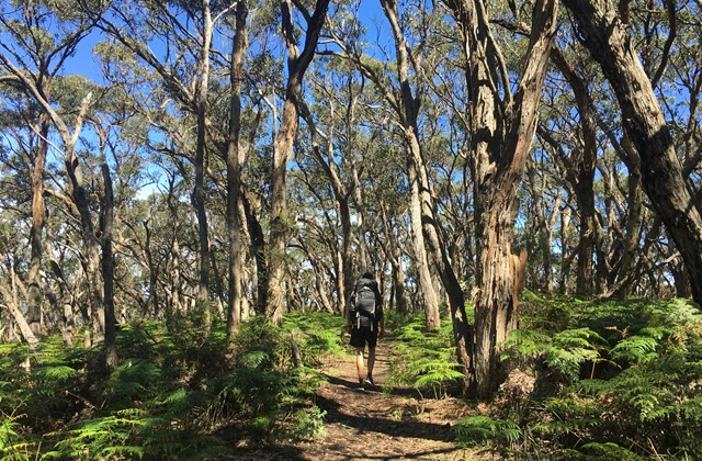 the great ocean pathway hiking trails australia esperance