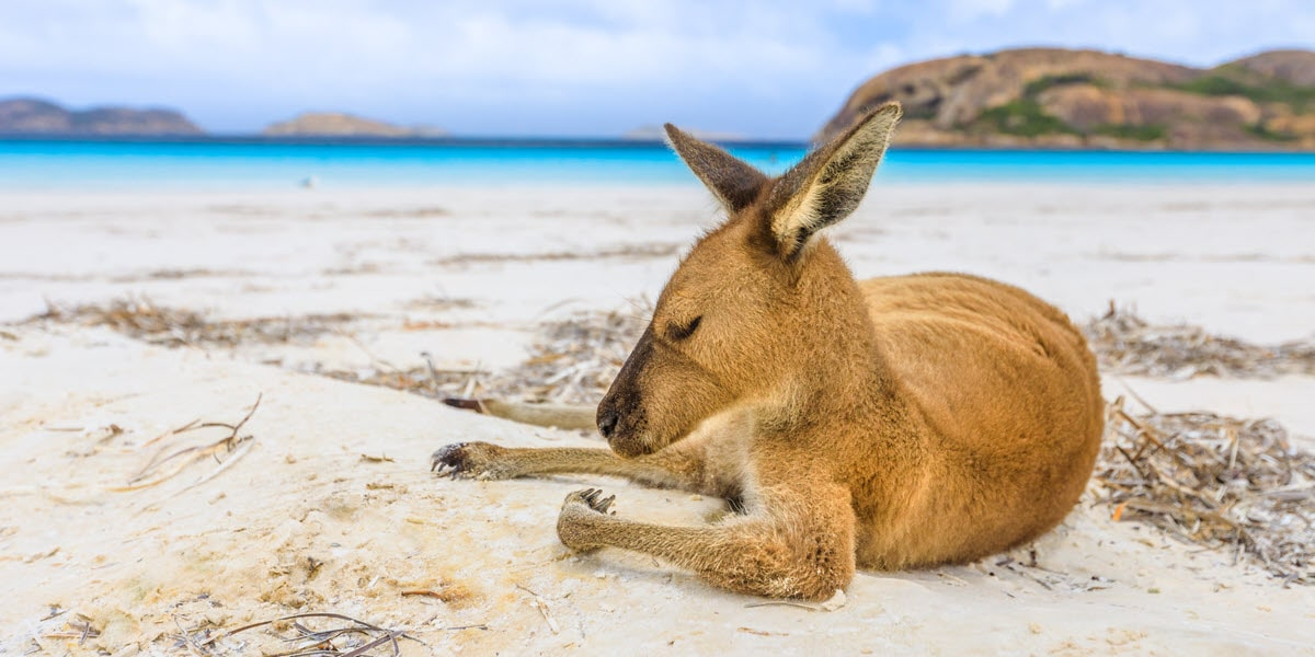 things to do at lucky bay esperance
