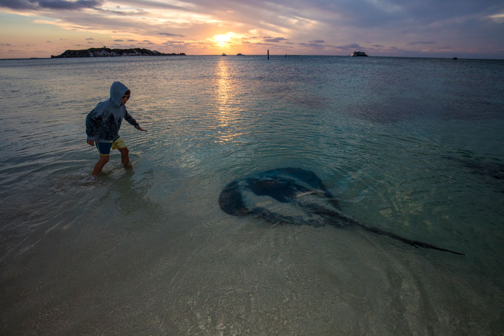 Friendly Sting Rays at Hamelin Bay Beach, Western Australia.