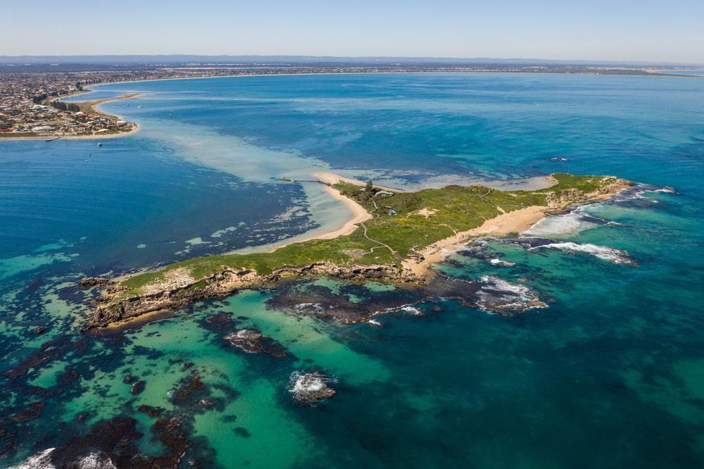 One of Perth's best snorkelling spots: Penguin Island, Rockingham.