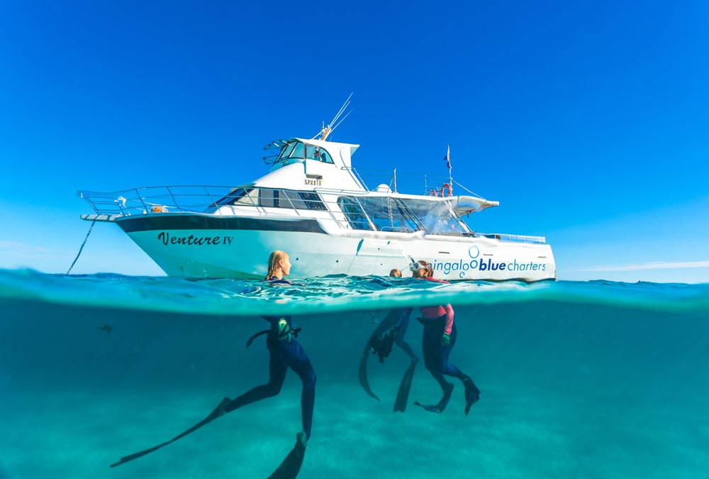 Take a snorkelling charter tour with Ningaloo Blue Charters.