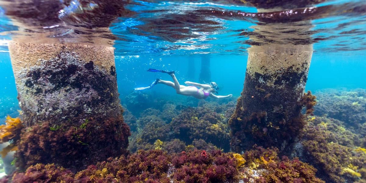 Snorkelling at Woody Island, near Esperance.