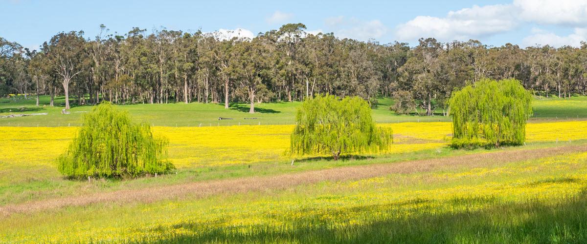 Wildflowers in Bridgetown, Western Australia.