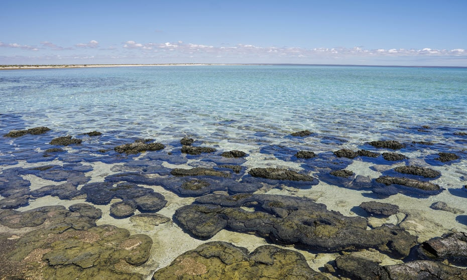 View of Hamelin Pool Marine Reserve - on list of things to do in Shark Bay.