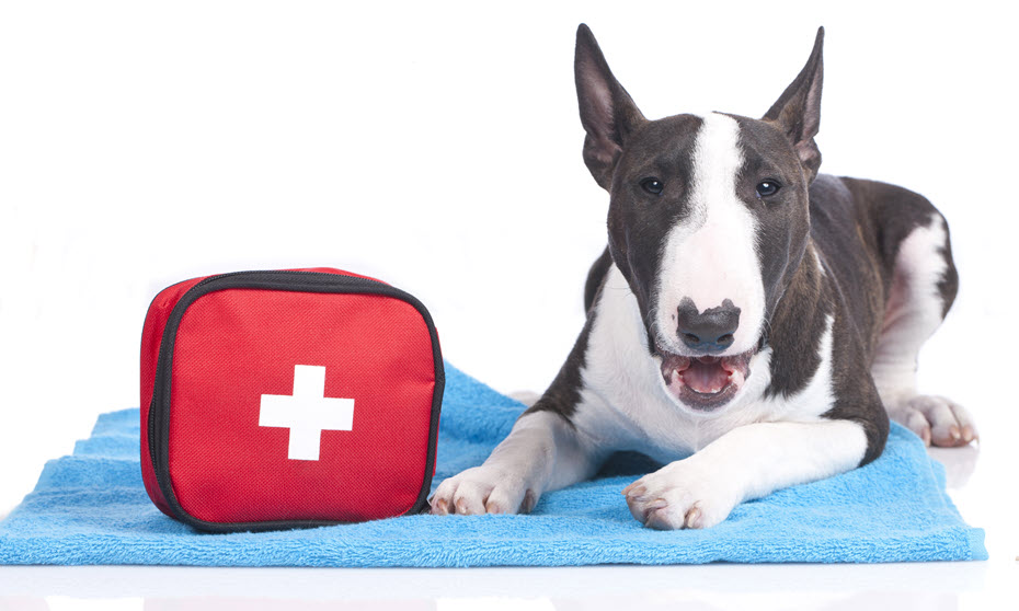 First aid kit for dogs.