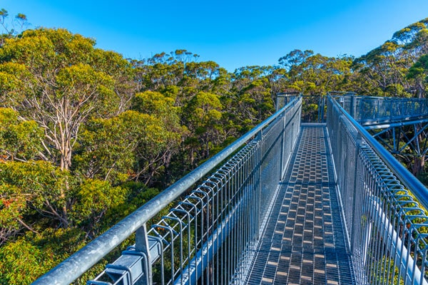 walpole tree top walk valley of the giants visit