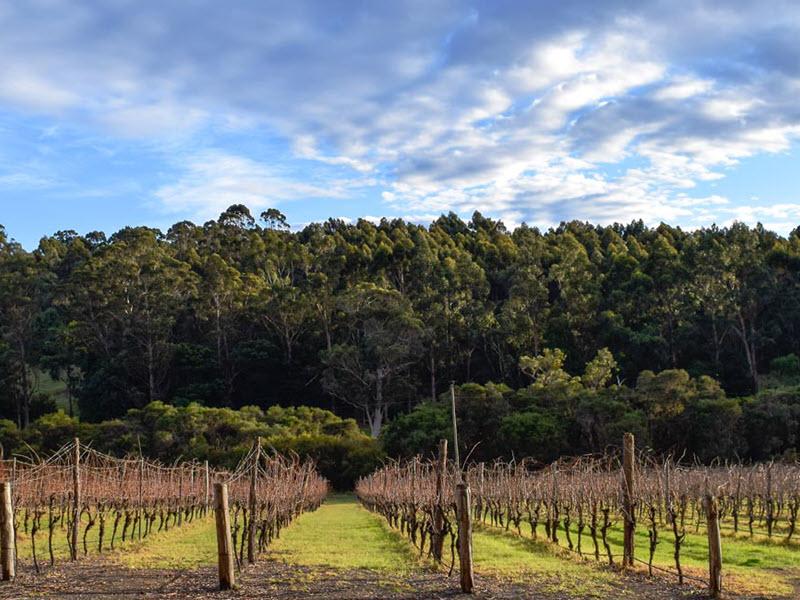 walpole vineyards breweries