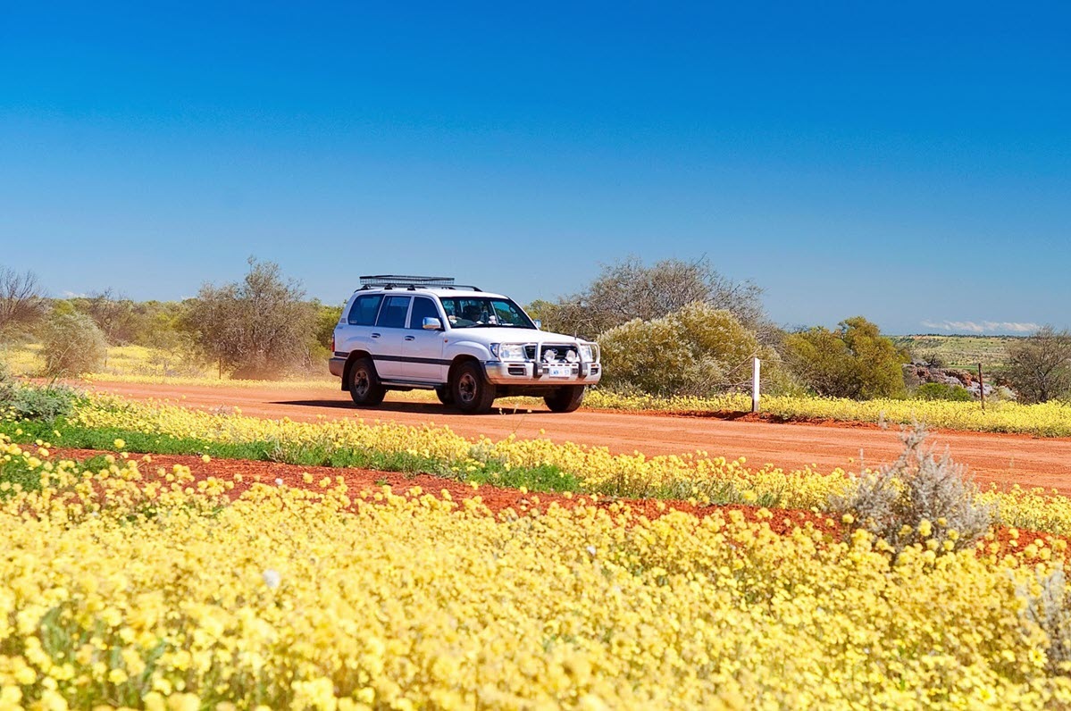 wanderoutyonger wildflowers western australia